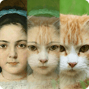 Tải ZooFace ứng dụng người hóa thú cho Android